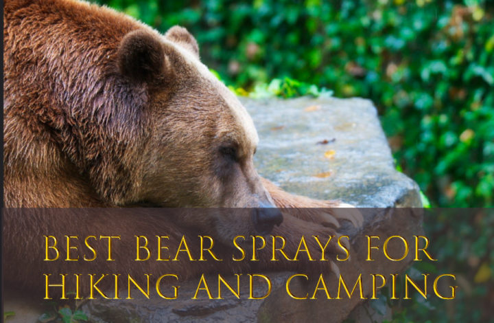 Best Bear Sprays for Hiking and Camping